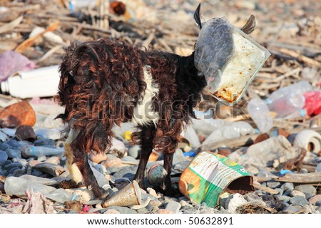 Goat with plastic bag on head â?? man-made environmental disaster - stock photo