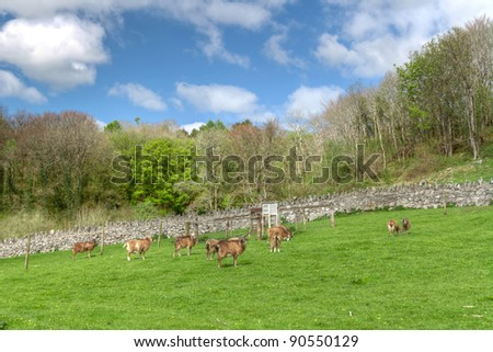 Goats on idyllic meadow