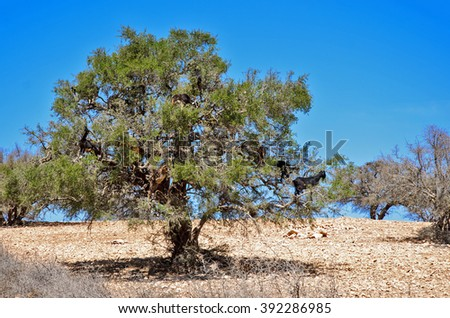 Goats on tree - stock photo
