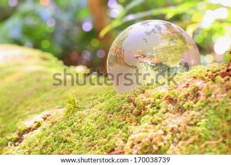Gobal glass earth map on moss in forest tree. - stock photo