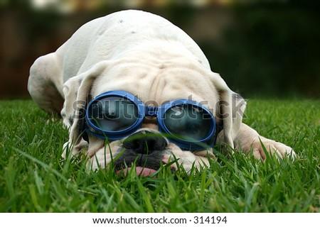 Goggles - stock photo
