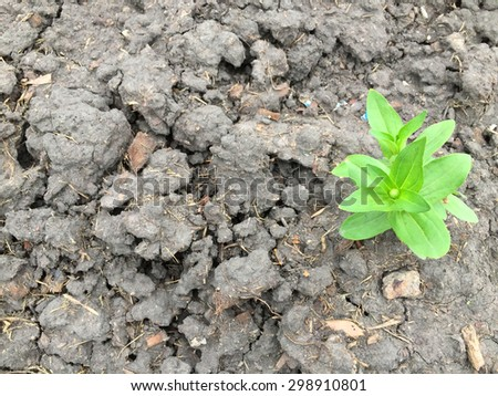 Going to big tree in the future. - stock photo