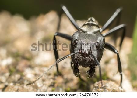 Gold ant head - stock photo