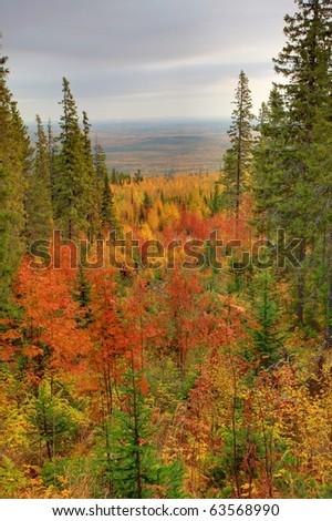 Gold autumn in the mountains - stock photo