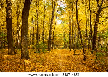 Gold Autumn landscape with footpath - Beautiful Trees in the park, fall season - stock photo