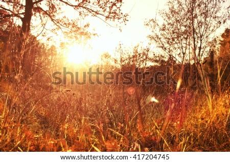 Gold autumn with sunlight. Autumn forest. Beautiful autumn nature background. - stock photo