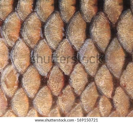 Gold background - fish scales. Whole background - stock photo