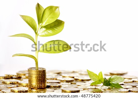gold coin money with green leaf growing