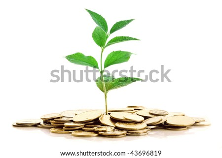 Gold Coins and plant isolated on white background