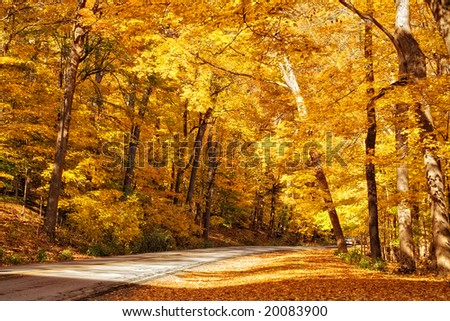 Gold colored autumn trees line the road in a park. - stock photo