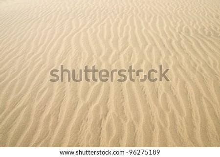 Gold desert into the sunset. Sand texture. - stock photo