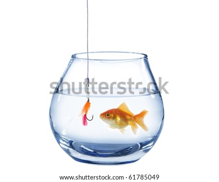 gold fish and artificial fly on white background - stock photo