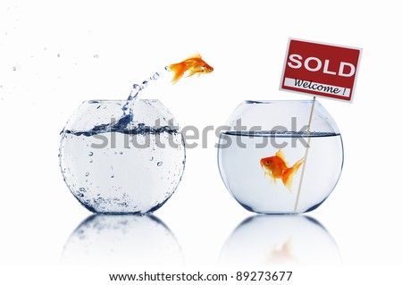gold fish in a fishbowl - stock photo