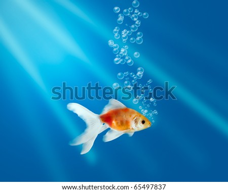 Gold fish in aquarium with water-bubbles and rays of light - stock photo