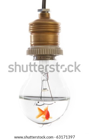 Gold fish in Light bulb - stock photo