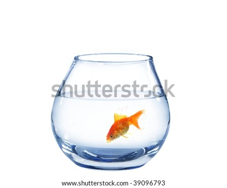 gold fish in spherical aquarium on white background - stock photo