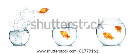 Gold fish jumping out of water in fishbowl - stock photo