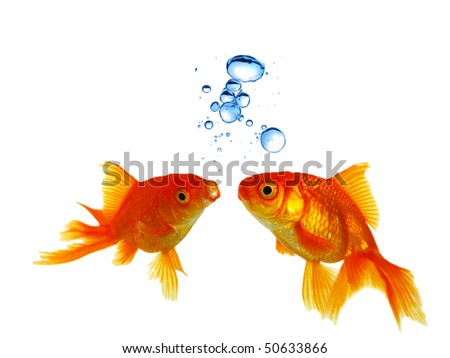 Gold fishes with bubbles - stock photo