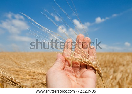 gold harvest in hand - stock photo