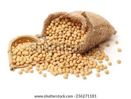 gold soybean isolated on white background  - stock photo