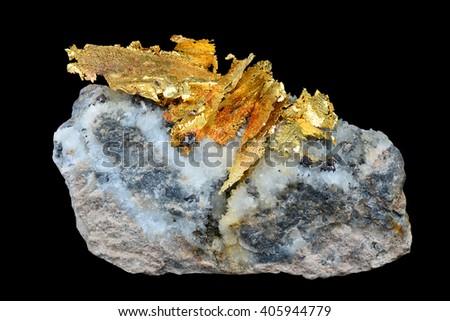 Gold specimen from Verespatak, Rosa Montana, Romania.  - stock photo
