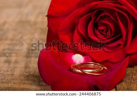 Gold wedding rings on rose petal - stock photo