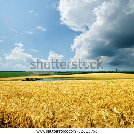 gold wheat under cloudy sky - stock photo