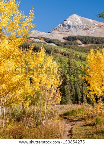 Golden aspens at the Woods Lake, Colorado.