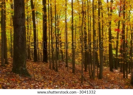 Golden Autumn foliage at Augusta, West Virginia - stock photo