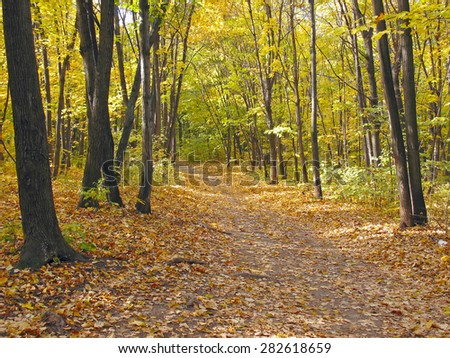 Golden autumn in forest. Falling leafs  - stock photo