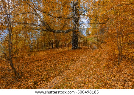 Golden autumn in the month of October in a beautiful forest