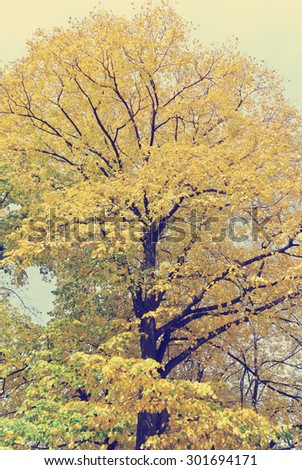 Golden autumn landscape - tree with yellow leaves on a sunny day in early autumn. Image filtered in faded, washed out, retro, Instagram style with soft focus; nostalgic, vintage autumn concept.