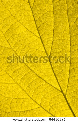 Golden autumn leaf background - stock photo