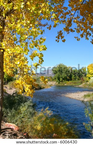 Golden autumn leaves of the cottonwood (Populus fremontii) frame the Arkansas River on a crisp September day in southern Colorado. - stock photo
