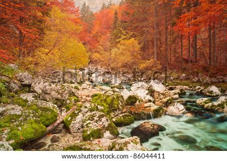 Golden autumn mountain forest with turquoise brook. Triglav national park, Slovenia. - stock photo