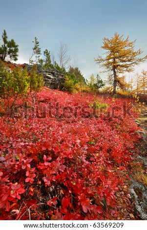 Golden autumn on the North Urals - stock photo