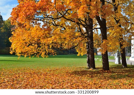 Golden autumn trees in the beautiful park in a sunny day