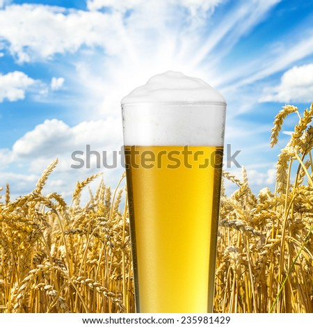 Golden beer drops of condensation against wheat field - stock photo