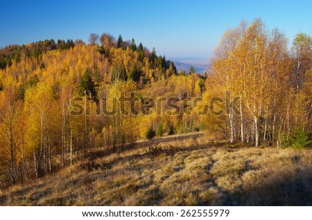 Golden birch on the hills. Autumn landscape in the mountains. Beauty in nature - stock photo