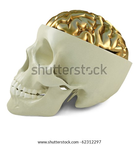 golden brains in the human skull. 3d image. - stock photo