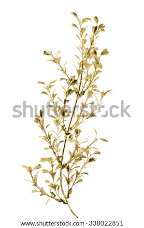 Golden Christmas decoration branches on white background. - stock photo