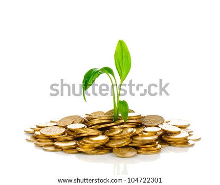 Golden coins and plant isolated on white - stock photo