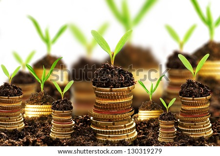 Golden coins in soil with young plant isolated. Money growth concept. - stock photo