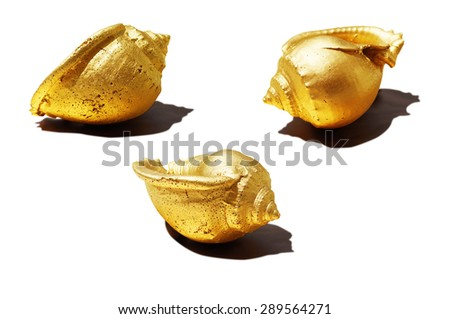 Golden Conch - stock photo