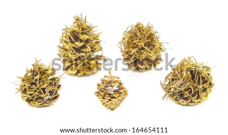golden cones with fir needles on white background