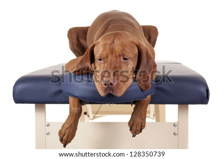 golden dog laying on the massage table on white background - stock photo
