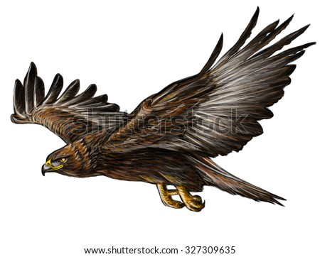 Golden eagle flying draw and paint on white background.