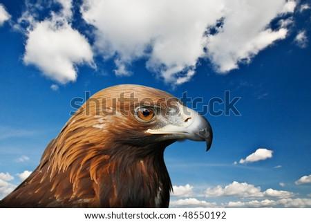golden eagle on sky background - stock photo