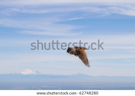 Golden eagle over mountains - stock photo