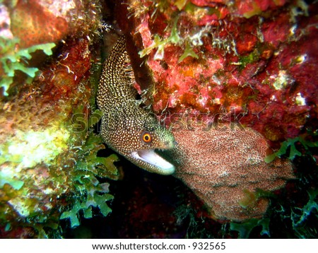 Interracial Clam Diving